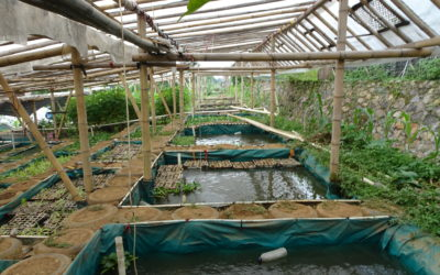Fantastic tropical aquaponics made from thousands of recycled car tyres